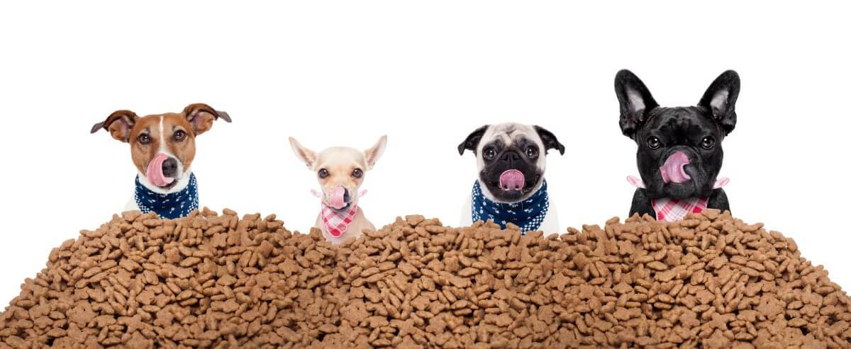 Evcil Hayvan Yiyeceklerinde Su Aktivitesi Ölçümü